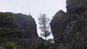 Tahiti005